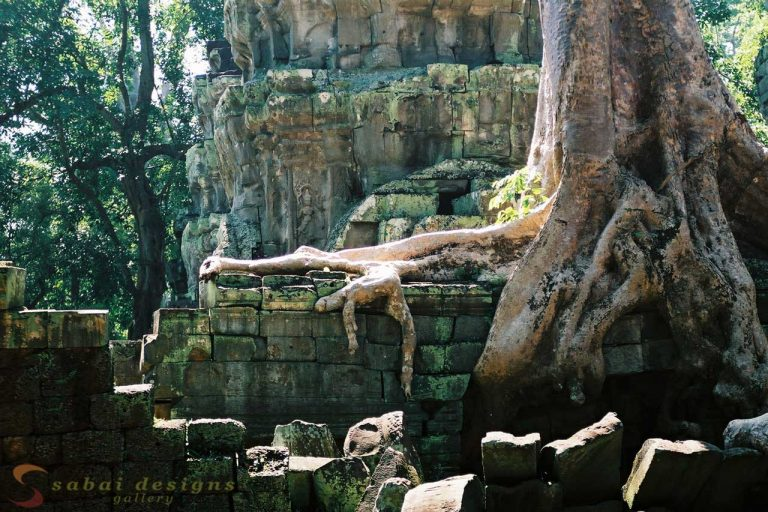Ta Prohm Siem Reap Angkor, Cambodia